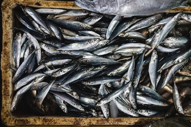 Luftaufnahme von fischen auf einem fischmarkt des frühen morgens Kostenlose Fotos