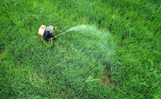 Luftbild von fliegenden drohne. thailändischer landwirt, der chemikalie zum jungen grünen reisfeld sprüht Premium Fotos