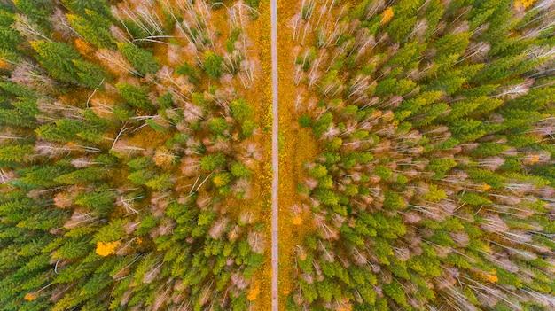 Luftwaldansicht zur herbstzeit mit gutem wetter Premium Fotos