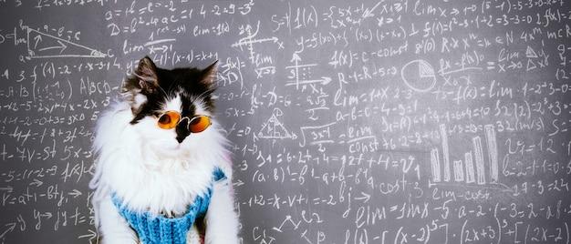 Lustige katze in gestricktem winterpullover und brille über tafel mit wissenschaftlichen formeln beschriftet Premium Fotos