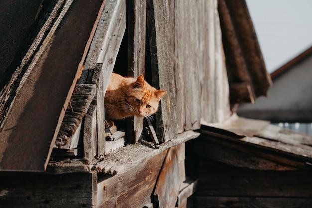 Lustige rote katze im freien Premium Fotos