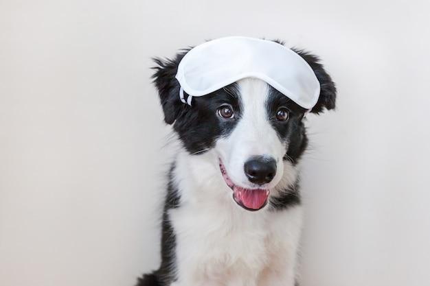 Lustiger netter smilling hündchenborder collie mit der schlafenaugenmaske lokalisiert auf weißem hintergrund Premium Fotos