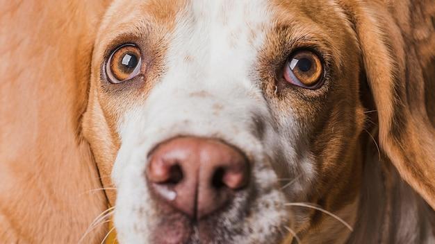 Lustiges gesicht der nahaufnahme des schönen hundes Kostenlose Fotos