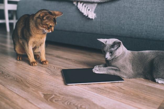 Lustiges kätzchen zwei, das am tablettenschirm aufpasst Premium Fotos