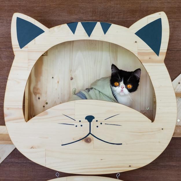 Lustiges porträt der schwarzweiss-katze schauend mit lustigem gefühlgesicht auf dem katzengesichtsregal. Premium Fotos