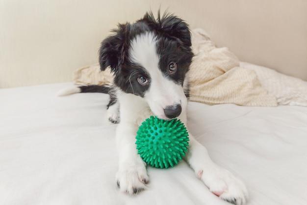 Lustiges porträt des netten hündchenborder collie lag auf kissendecke im bett und spielte mit grünem spielzeugball Premium Fotos