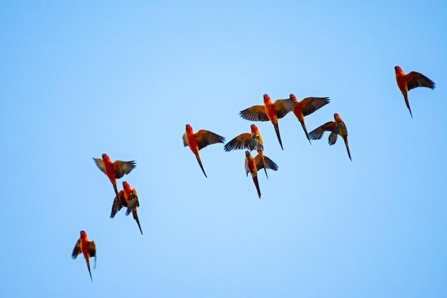 Macaw mit hintergrund des blauen himmels. Premium Fotos