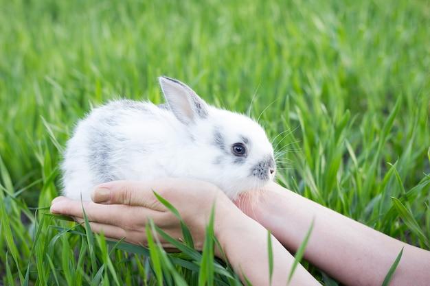Mädchen, das ein kleines kaninchen auf einer grünen wiese hält. Premium Fotos