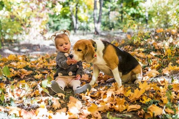 Mädchen, das mit dem spürhund spielt, der in den ahornblättern am wald sitzt Kostenlose Fotos