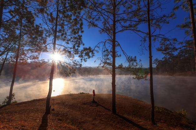 Mädchen oder frau, die ansichtskiefernwald auf morgenzeit sehen Premium Fotos