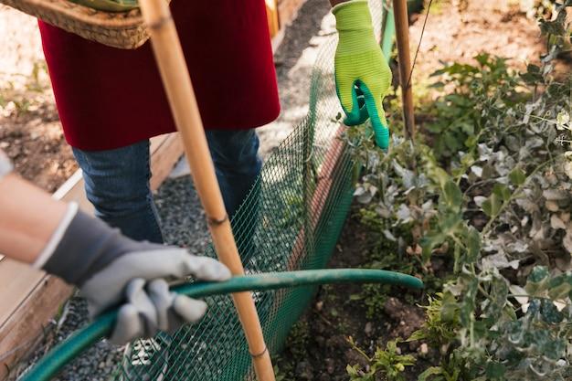 Männlicher gärtner, der ihren freund führt, um die anlage mit schlauch zu wässern Kostenlose Fotos