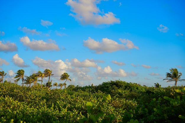 Mahahual karibischer palmendschungel Premium Fotos