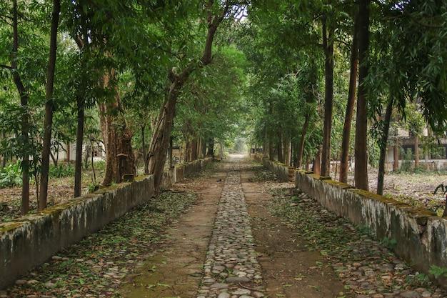 Maharishi mahesh yogis ashram Premium Fotos