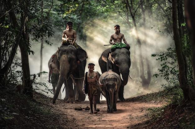 Mahout in der provinz surin, thailand Premium Fotos