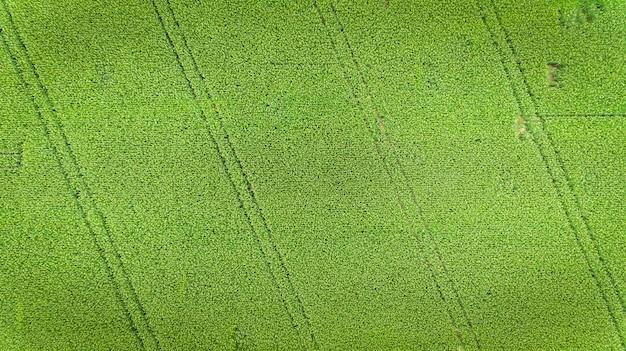 Maisfeld luftbild, angebaute maiskulturen. Premium Fotos