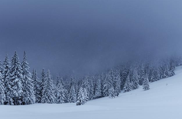 Majestätische winterlandschaft, kiefernwald mit schneebedeckten bäumen. eine dramatische szene mit niedrigen schwarzen wolken, eine ruhe vor dem sturm Kostenlose Fotos