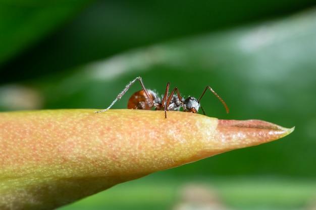Makro ameisen auf pflanzen Premium Fotos