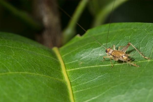Makro insekt Premium Fotos