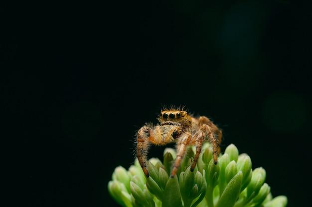 Makroaufnahme einer spinne auf grüner pflanze auf schwarzem hintergrund Kostenlose Fotos