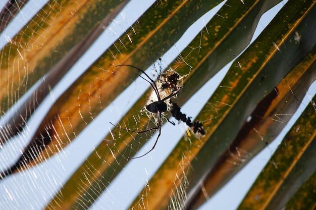 Makrofotografieschuss einer schwarzen spinne, die ein spinnennetz auf einem verschwommenen hintergrund webt Kostenlose Fotos