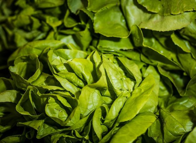 Makroschuß des frischen kopfsalates im shop Kostenlose Fotos