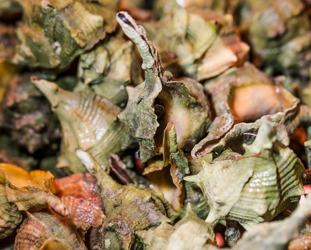 Makroschuß von frischen meeresfrüchten Kostenlose Fotos