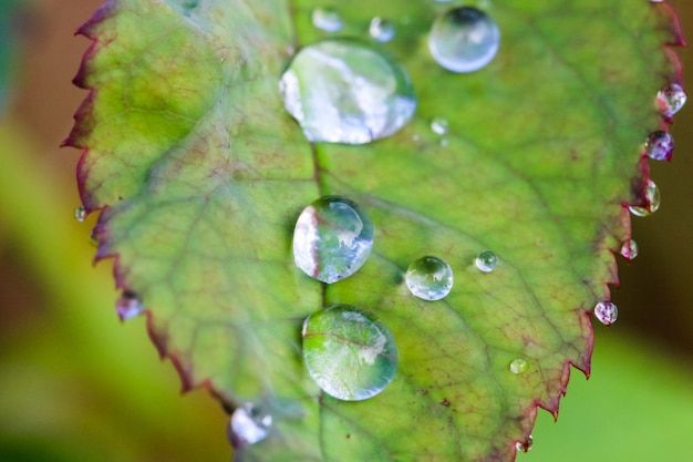 Makroschußwassertropfen auf dem grünen blatt Premium Fotos