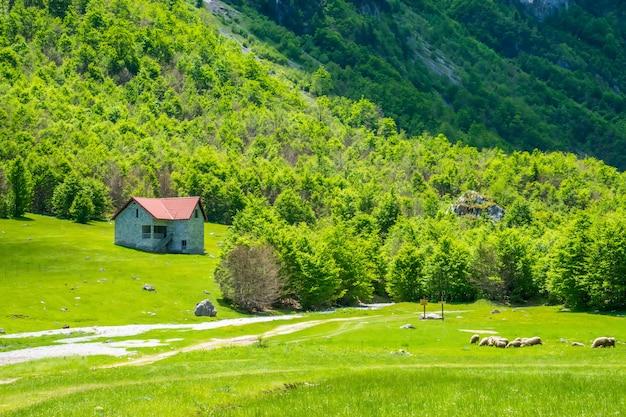 Malerische grüne wiesen in der nähe der großen hohen berge. Premium Fotos