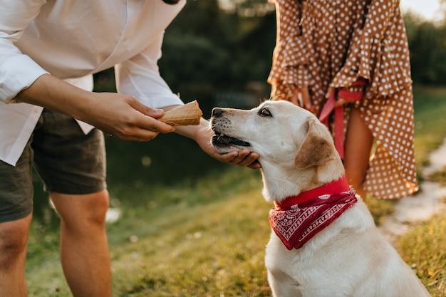 Man gibt seinem labrador eine waffeltasse mit eis, während er durch den park geht. Kostenlose Fotos