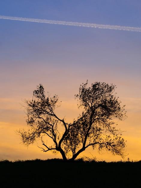 Mandelbaumschattenbild in einem sonnenuntergang Premium Fotos