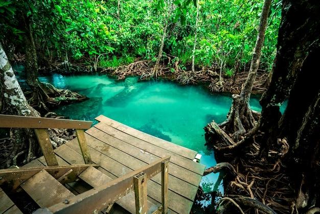 Mangrovenwald klares wasser, landschaftswald im nationalpark krabi, thailand. Premium Fotos