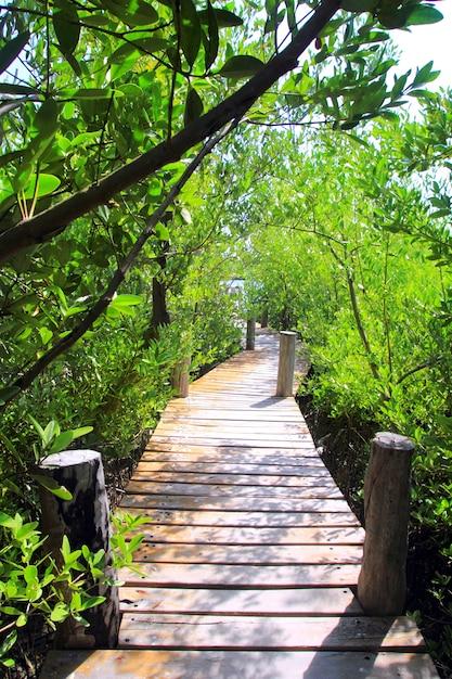 Mangrovenwaldgehwegdschungel mexiko Premium Fotos