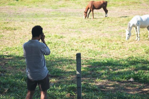 Mann, der ein foto von pferden macht Premium Fotos