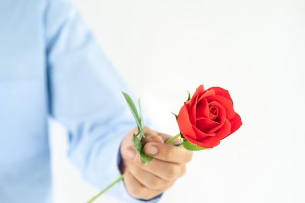 Mann, der in der hand rotrose auf weiß hält Premium Fotos