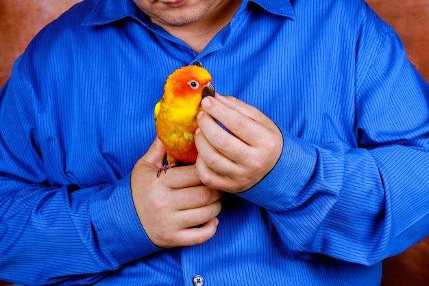 Mann genießen, mit papagei im haus zu spielen, bunte papageien zu halten Premium Fotos