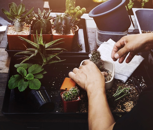 Mann houseplant auf dem tisch gartenarbeit Kostenlose Fotos