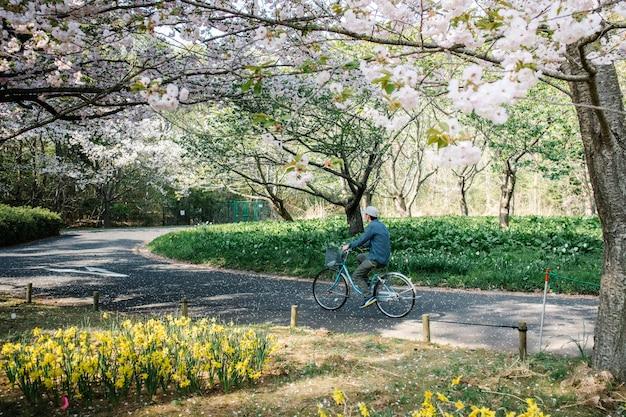 Mann mit dem fahrrad auf dem weg in sakura park Kostenlose Fotos