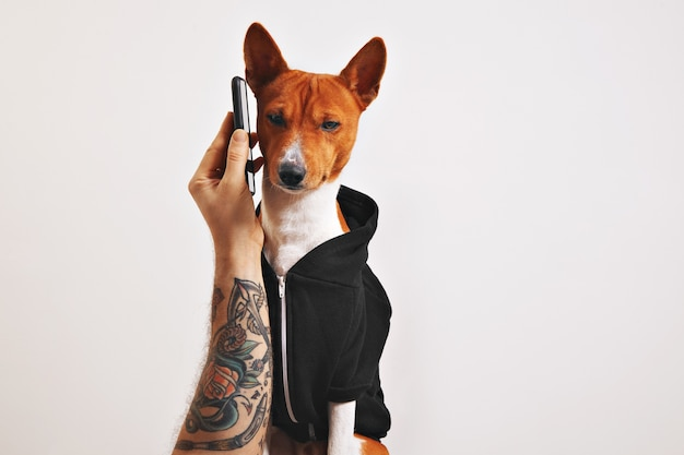Mann mit tätowiertem arm hält ein smartphone an das ohr eines basenji-hundes im schwarzen kapuzenpulli, der auf schwarz isoliert wird Kostenlose Fotos
