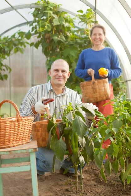Mann und frau in gemüsepflanze Kostenlose Fotos