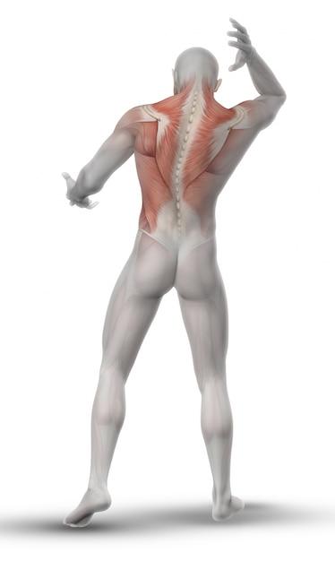 Mannausdehnen Rückenmuskulatur Kostenlose Fotos