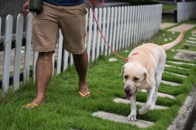 Mannweg mit labrador-apportierhundhund Premium Fotos