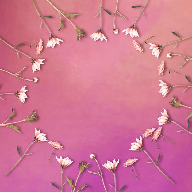 Margarita blüht in kreisform auf lila hintergrund mit kopienraum, blumenhintergrund, glücklichem valentinstag, muttertag, flache lage, draufsicht Premium Fotos