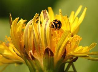Marienkäfer Blumen Textil Download Der Kostenlosen Fotos