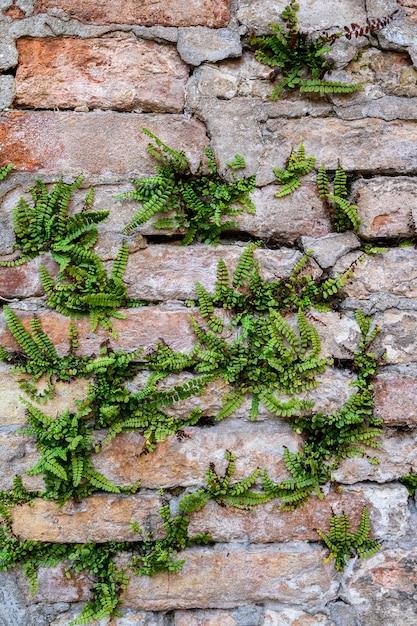 Massive wand mit grünpflanzen. moosige rustikale steinwandnahaufnahmefotobeschaffenheit. grünes moos auf steinnahaufnahme Premium Fotos