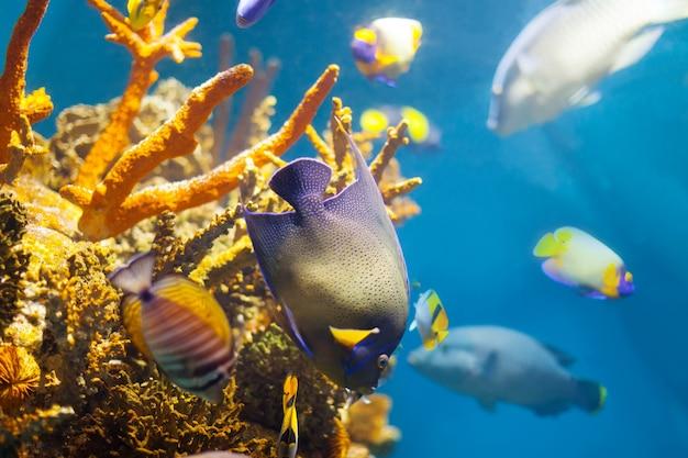 Mehrfarbige tropische fische an korallen Kostenlose Fotos