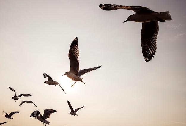 Menge der seemöwen, die in den himmel fliegen Kostenlose Fotos