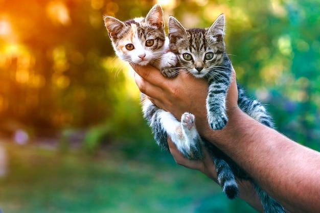 Menschliche hände, die hübsche kleine kätzchen halten Premium Fotos