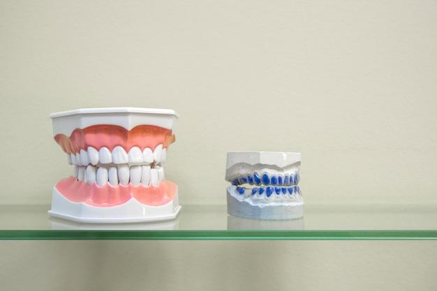 Menschliche plastikzahnmodelle und zahnmedizinisches modell von zähnen auf glasregal Premium Fotos