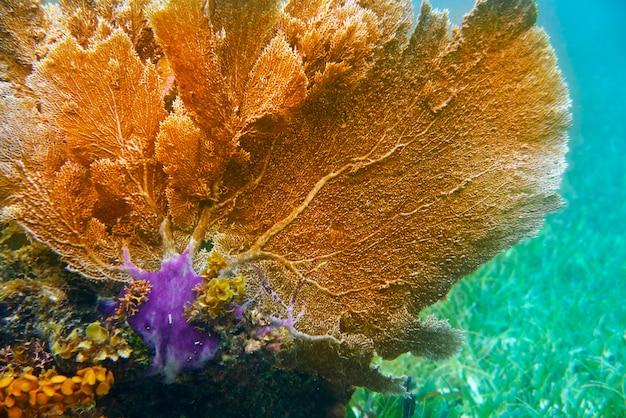 Mesoamerikanische barriere great mayan reef Premium Fotos
