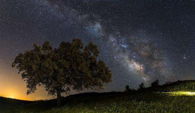 Milchstraße auf einem einsamen baum Premium Fotos